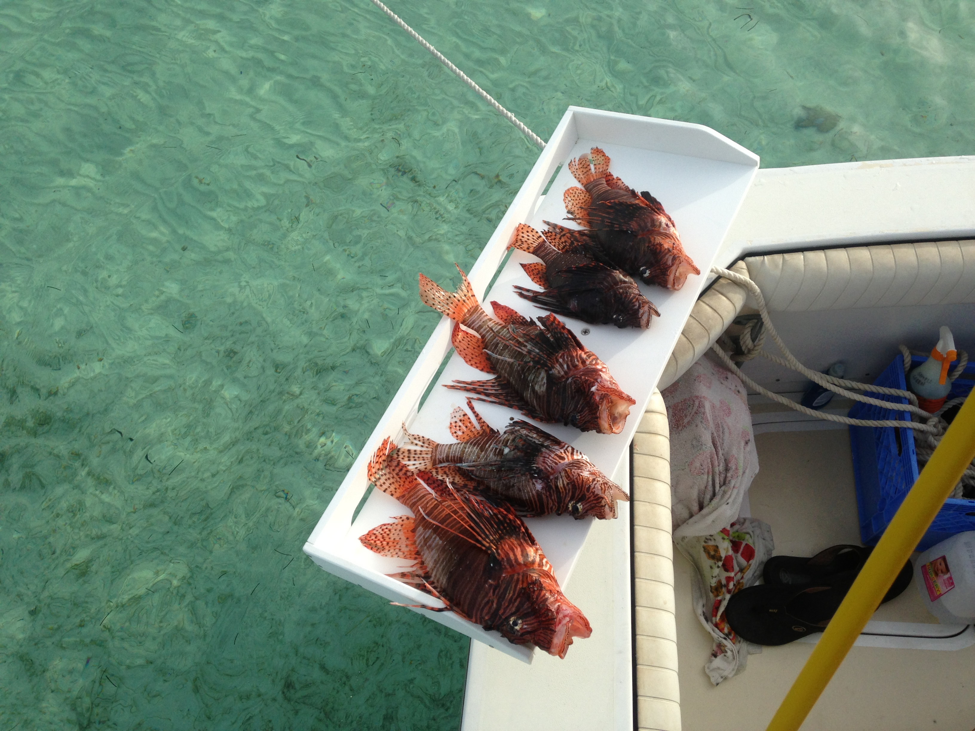 Beautiful Marathon Florida Keys Crystal Clear Water!